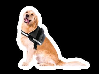 peitoral para cão doggy grande médio pequeno passeios