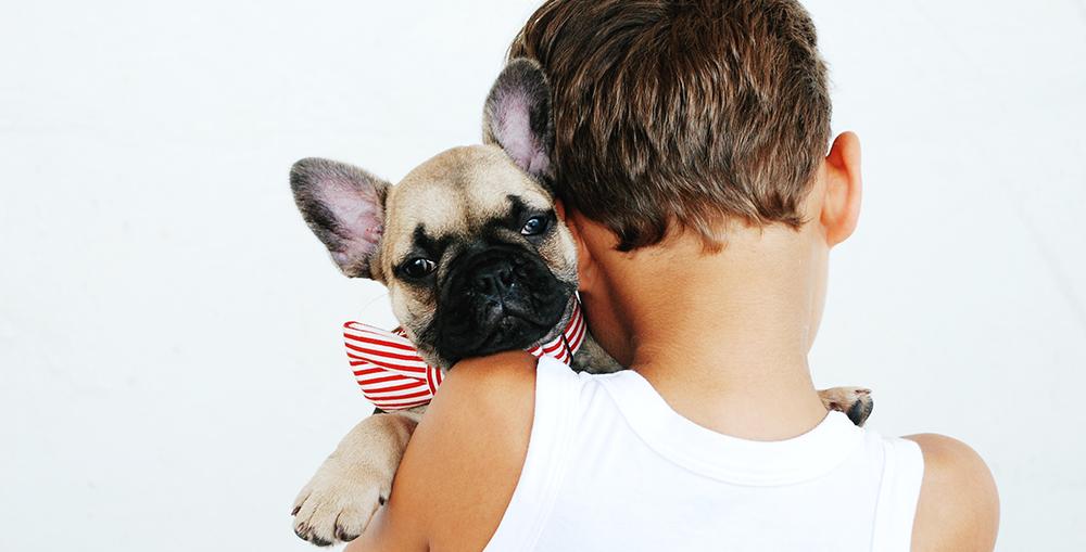 menino cão laço amor amizade dog lover