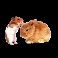 logo bribon outros roedores aves